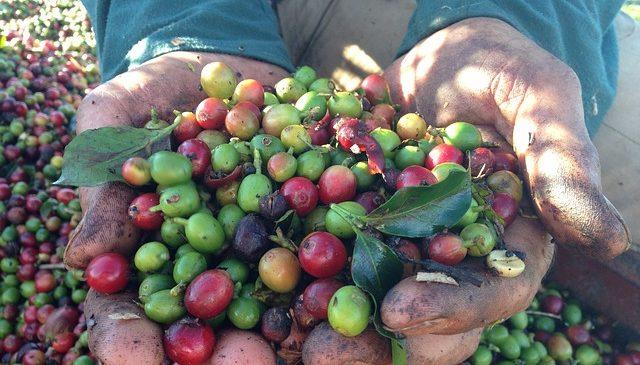 Brazil coffee shortage 2021